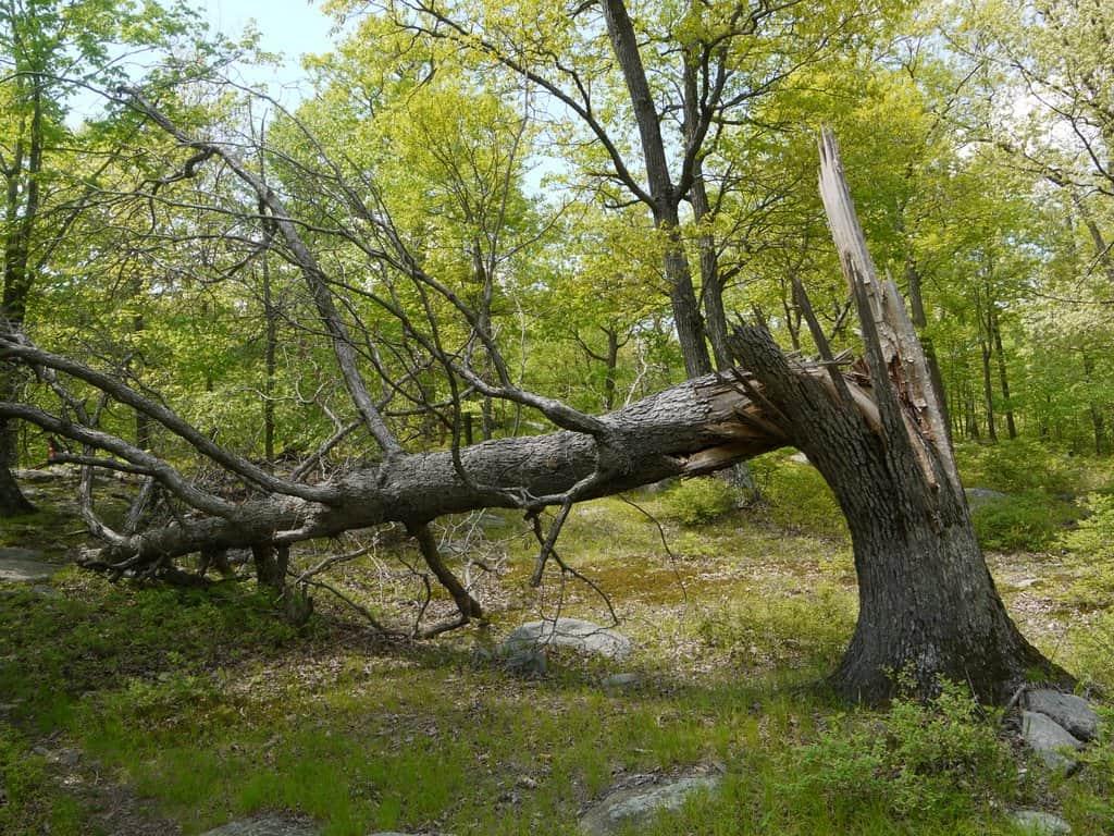 fallen-tree-wood-min
